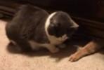 O gato explica o destino do empréstimo à Grécia